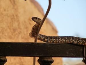 snake on gate almeria mojacar turre