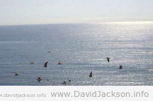 Birds above Macenas