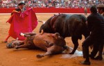 Barcelona bans all bullfight related festivals